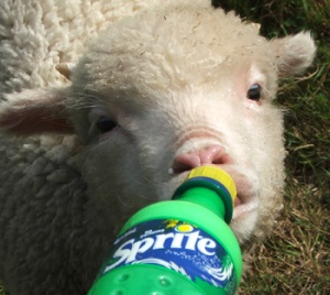 """No, Sprite's gonna get you tore up. Look at how faced this lamb is!"""